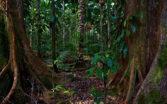 ‪‪Daintree Rainforest - Cooper Creek Wilderness‬: Daintree Rainforest (gondwana)‬