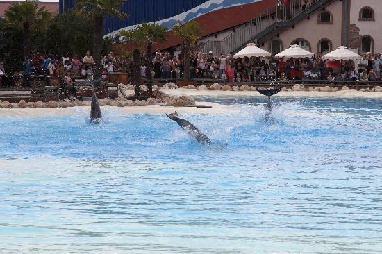 Lipperswil, Suíça: Fun watching the dolphin show