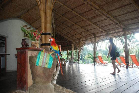Finca Exotica Ecolodge: Polly was an occasional visitor