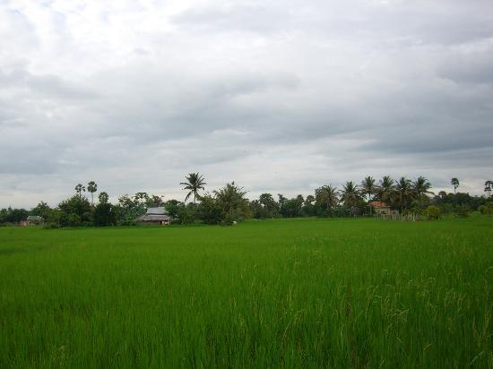 Meas Family Homestay: surrounding rice fields