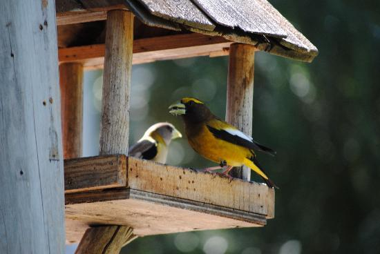 Run of the River: A plethora of birds visit the many feeders