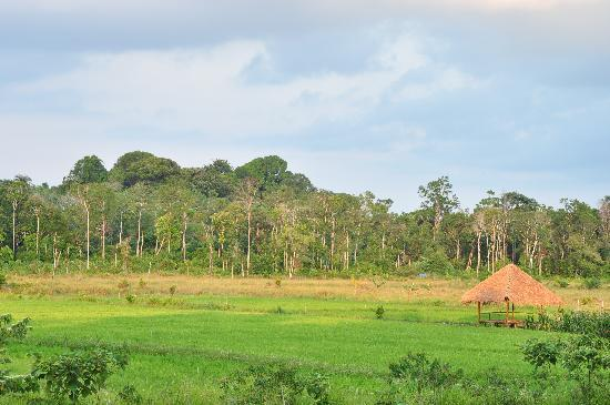 Sawah Ladang Bintan