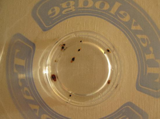 Merced, CA: Travelodge cup full of bedbugs