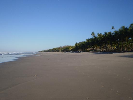Pachamama Tropical Garden Lodge: Mal pais