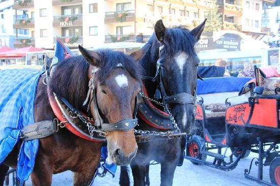 Antonius Hotel: Pferde in Lech.