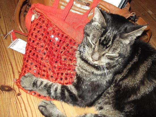 Naindevi Homestay: My cat is happy that I'm back and even he likes India as he holds my indian bag...
