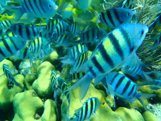 Mel Tours: Paradise Island lush marine life