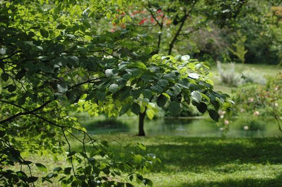 I giardini di ninfa picture of giardino di ninfa monumento naturale cisterna di latina - I giardini di ninfa ...