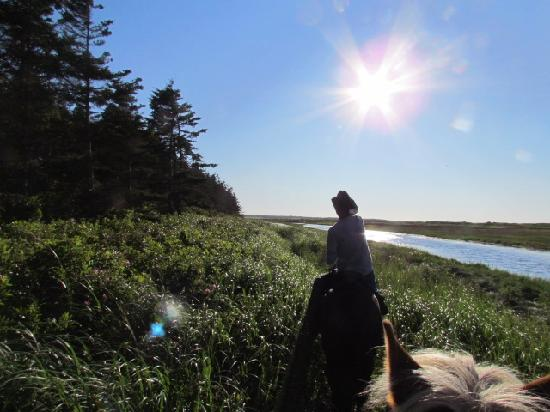 Lakeside Circle T Trail Rides: beautiful scenery along the hour ride