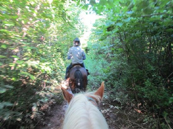 Lakeside Circle T Trail Rides: Beautiful scenery on the hour long ride
