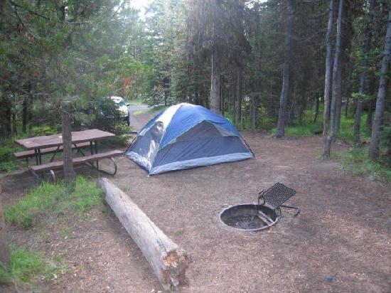 Bridge Bay C&ground C&site H-389 & Campsite H-389 - Picture of Bridge Bay Campground Yellowstone ...