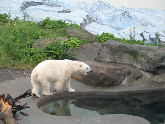 Aquarium du Quebec : Quebec Aquarium - Polar Bear