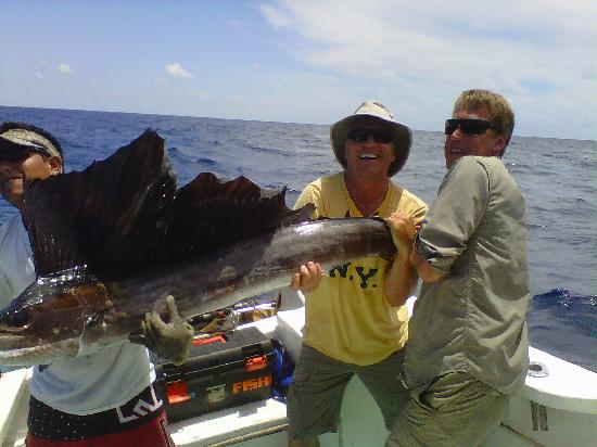 Mahache Tours: Sailfish- just a small one.