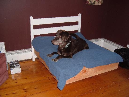West Rutland, VT : One Of The Many Dog Beds