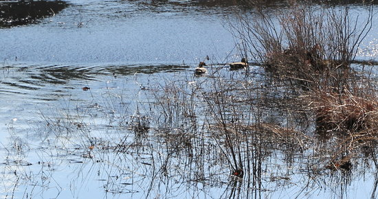 The Nature Trail And Cranberry Bog : Feathered friends