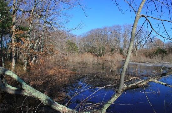 The Nature Trail And Cranberry Bog: View from walkway