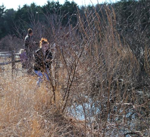 The Nature Trail And Cranberry Bog: Nature photographer outing