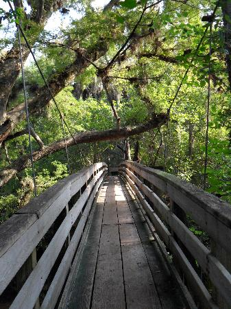 Thonotosassa, Floride : Suspension Bridge