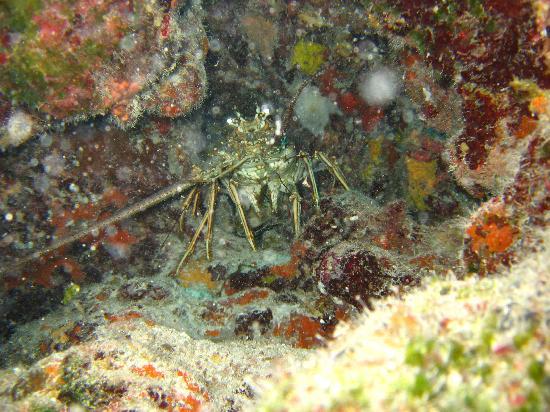 Palancar Reef: Buceo en el Arrecife Palancar. Cozumel. Mexico