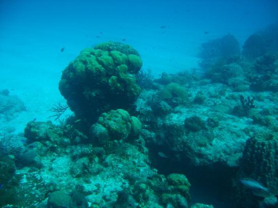 Palancar Reef : Buceo en el Arrecife Palancar. Cozumel. Mexico