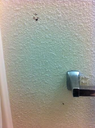 Motel 6 Oakland-Embarcadero: Stains on bathroom wall