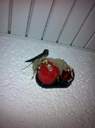 Lymberia Hotel: un altro nido