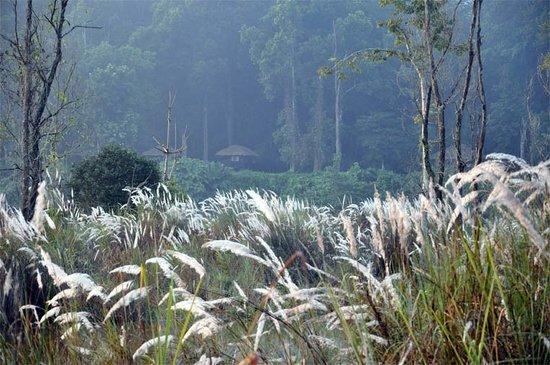 Temple Tiger Jungle Lodge