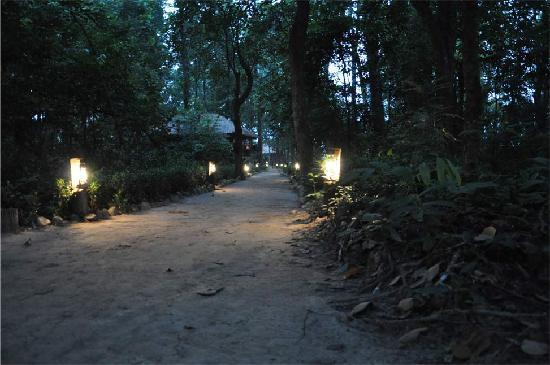 Temple Tiger Jungle Lodge Road lights during the Night time & Sighting of Rhinocerous in the Jungle - Picture of Temple Tiger ... azcodes.com