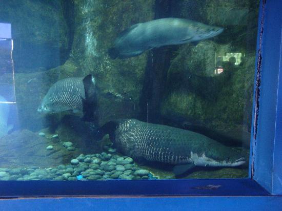 ... ! - Picture of Underwater World Langkawi, Langkawi - TripAdvisor