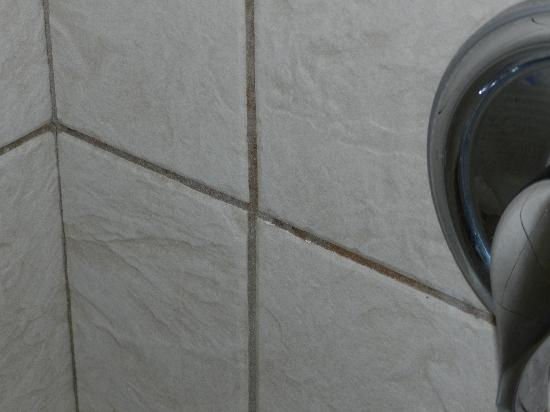 Pink Shell Beach Resort & Marina : Mold on the walls in the shower