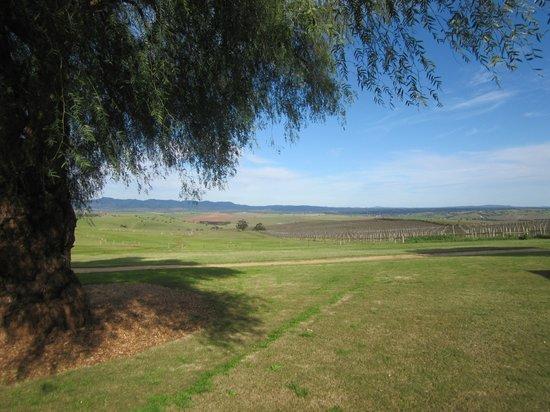 Pindarie Winery: Great view!