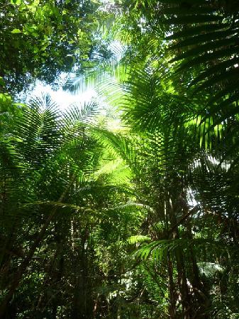 Awarradam Jungle Lodge: The forest