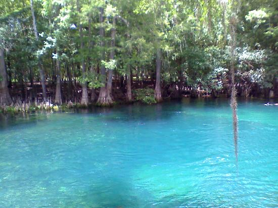 Manatee Springs State Park: The Spring swimming area