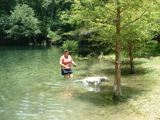 Manatee Springs State Park: The canoe launch - pet wading area