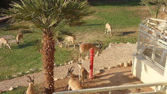 Ein Gedi - Beit Sarah Guest House : Besucher am Morgen, vor dem Hotelzimmer