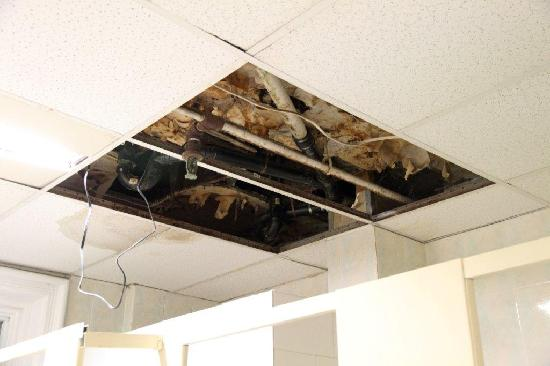 Global Village Backpackers: Above the showers, there was a missing ceiling panel, revealing dirty pipework that dripped onto