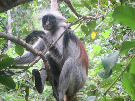 Eco & Culture Tours : jozani forest