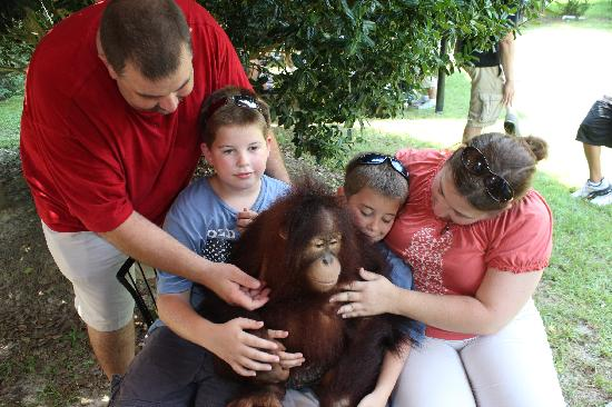 T.I.G.E.R.S. Preservation Station: hanging out with orang