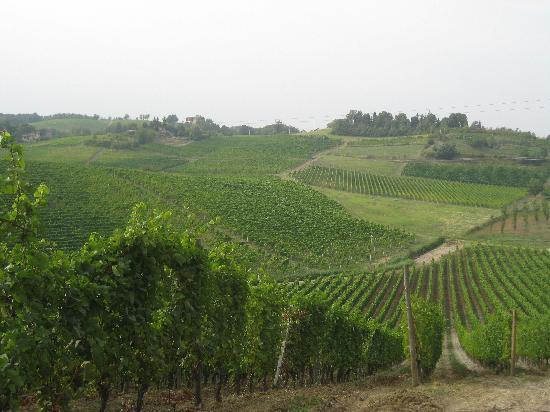 Albergo L'Ostelliere Villa Sparina Resort: ワイナリー