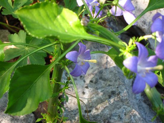 Giardino Botanico Carsiana: Flower Close-Up