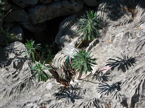 Giardino botanico Carsiana: Stone Garden