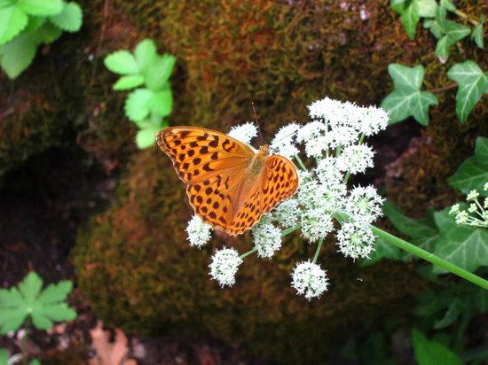 Giardino botanico Carsiana: Butterfly