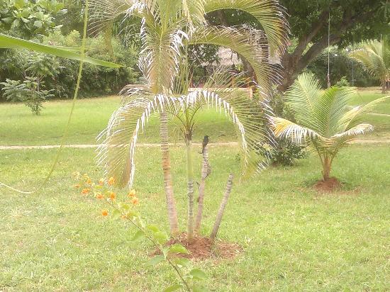 Hotel African Pearl: giardino
