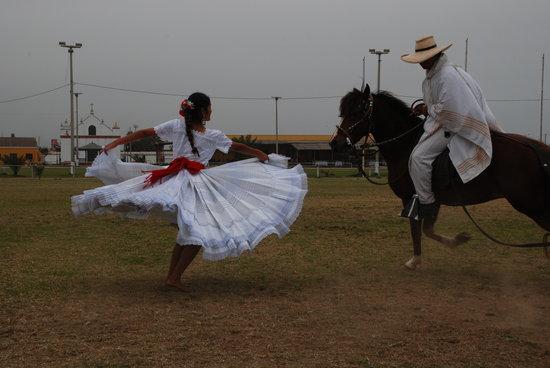 Trujillo, Perú: Caballos de paso peruanos y marinera
