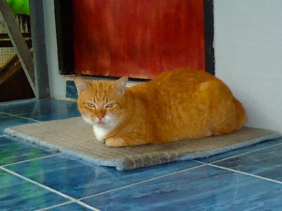 Time For Lime Bungalows: Ginger...the housecat