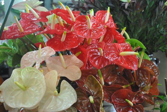Workers' Market (Mercado dos Lavradores): fleurs superbes