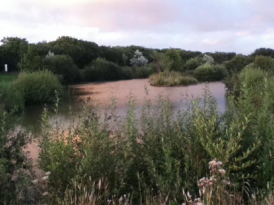 Perran Springs Holiday Park: Fishing lake