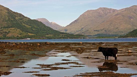 Cruachan B & B: Cooling down, Loch Creran