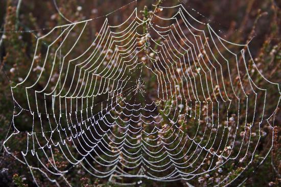 Cruachan B & B: We have free wi-fi access