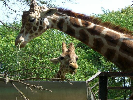 Utsunomiy Zoo